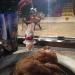 Medieval Chicken Nugget - Chicago